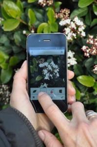 Image d'un smartphone photogrpahiant une plante à identififer