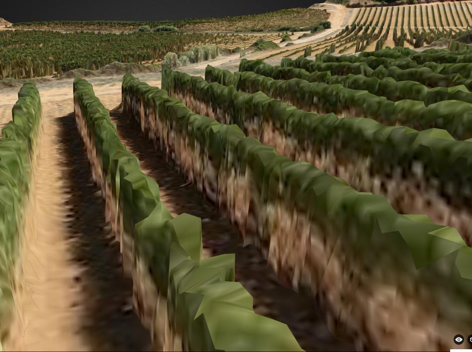 vigne_3D
